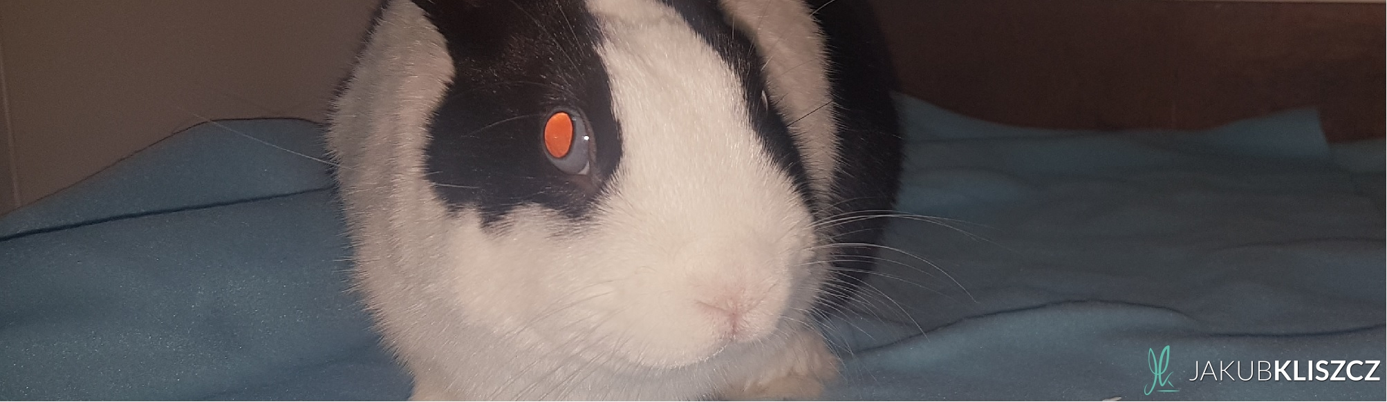 Stomatologia królików